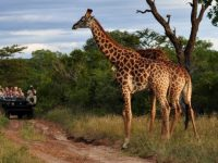 Best Time for Safaris