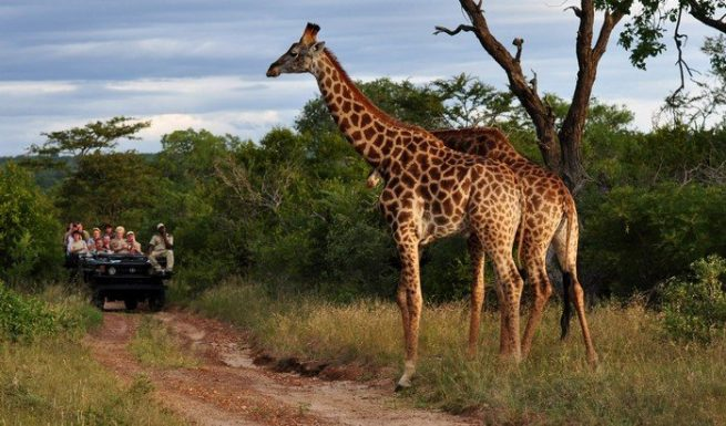 Best Time for Safaris in South Africa