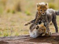 Average Cost of African Safari Vacation Packages