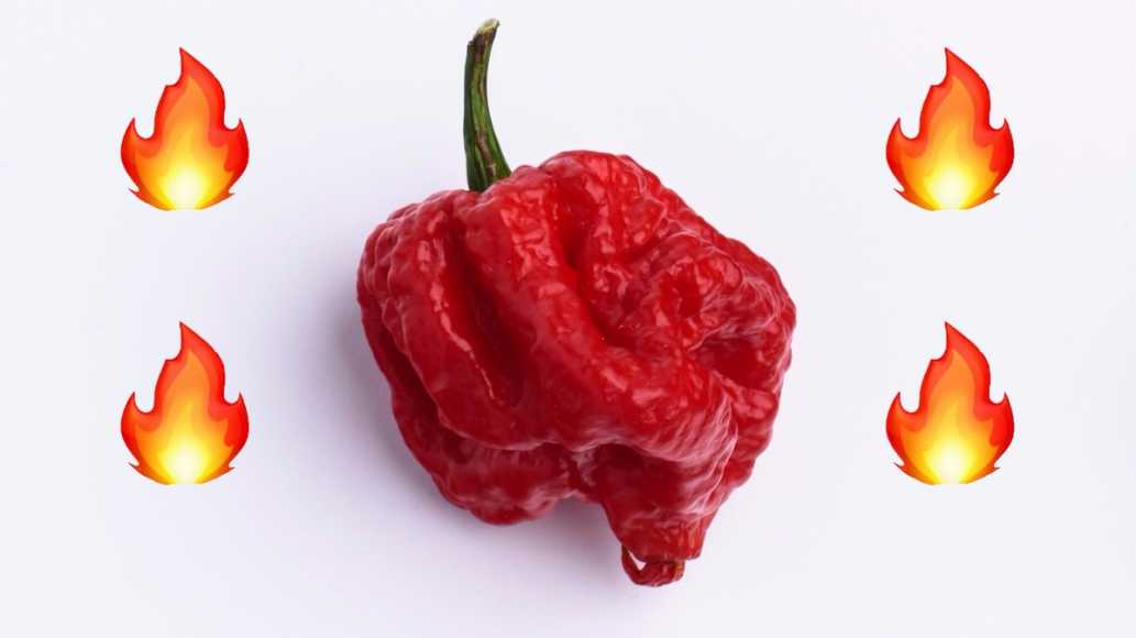 This Is What Eating the Hottest Pepper on Earth Will Do to Your Body